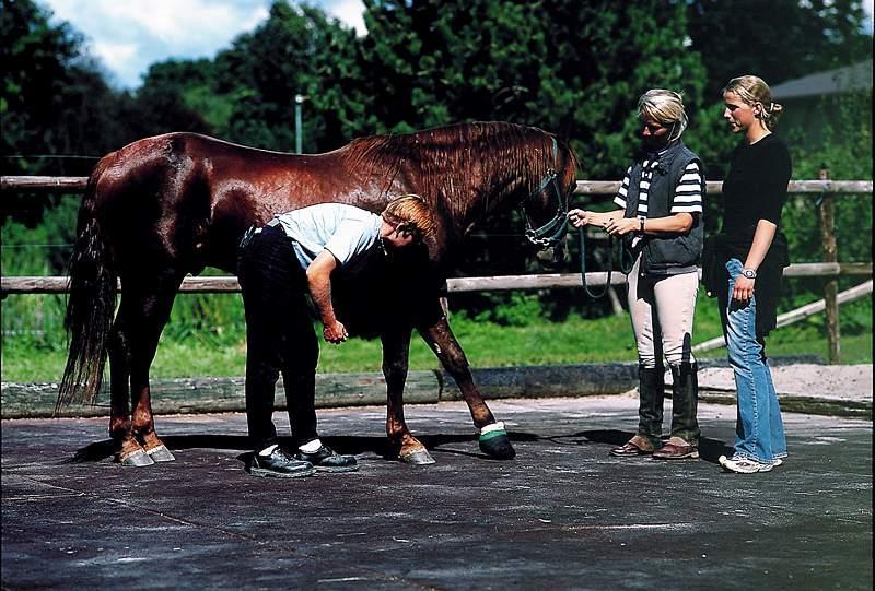 Beispielinstallation von Stallmatten aus Gummi am offenen Pferdestall